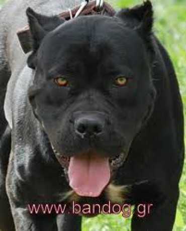 Dog Breed Import Picture